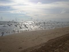 04-praiasouthpadreisland