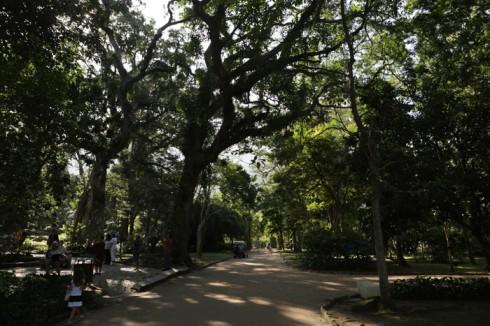 Quase que um túnel de árvores no Jardim Botânico