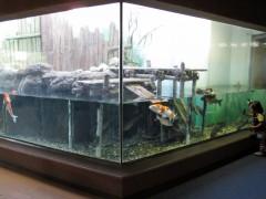 peixes rio e baía de tóquio