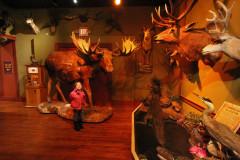 11-animaisbuckhornsaloon
