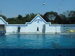 show de leão marinho