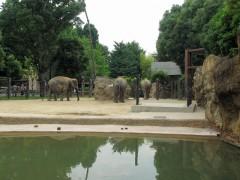 12-elefantesuenozoo