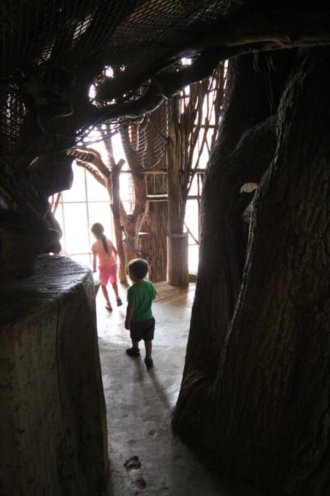 Julia e Eric chegando na tree house