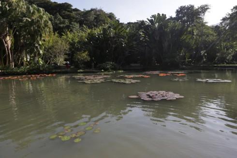 Lago das vitórias-régias no Jardim Botânico