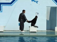 show de leão marinho aquário de shinagawa