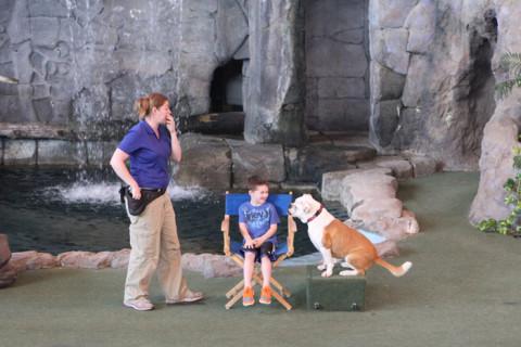 Animal Actors show, bonitinho pras crianças