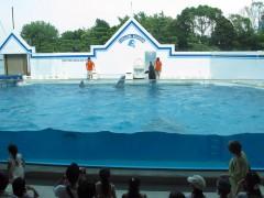 show de golfinhos aquário de shinagawa
