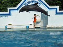 show de golfinhos tóquio