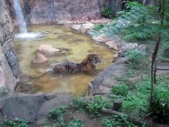 18-tigreusenozoo