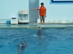 golfinho com bambolê aquário de shinagawa tóquio