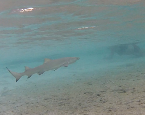 Nós vimos 2 tubarões nesse mergulho, as crianças amaram
