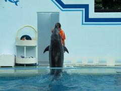 golfinho em pé aquário de shinagawa tóquio