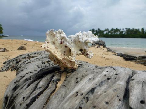 Pedaço de coral e um tronco de coqueiro na praia da Ilha Arridup