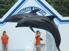golfinhos pulando no aquário de shinagawa