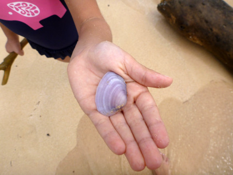 Julia mostrando a conchinha lilás que ela encontrou