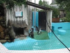 23-pinguinsuenozoo