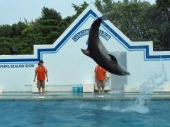 golfinhos cambalhota aquário de shinagawa tóquio