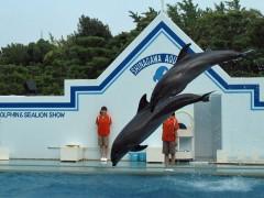 golfinhos pulando aquário de shinagawa tóquio