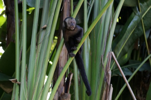 Um dos macacos no Jardim Botânico