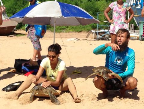 Captura intencional das tartarugas na praia do Porto com o projeto Tamar