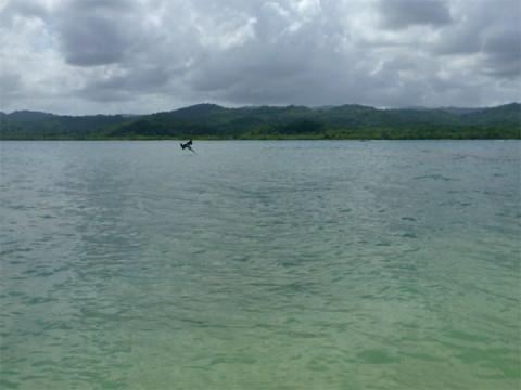 Peguei o pelicano no momento do mergulho