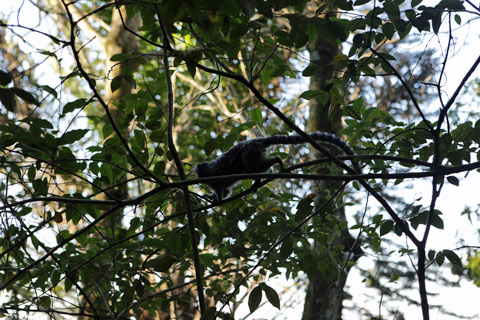 Um dos saguis que vi no Bosque