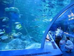 tunel do aquário de shinagawa