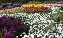 Um dia no Keukenhof, o maior jardim de tulipas do mundo
