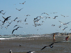 33-praiasouthpadreisland