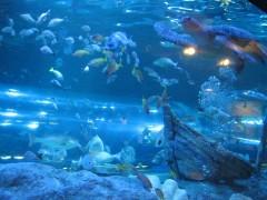 tartaruga e outros peixes no aquário de shinagawa