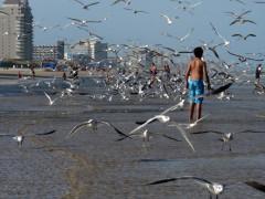35-praiasouthpadreisland