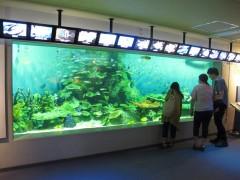 tanque tropical aquário de shinagawa tóquio