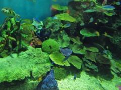 peixes no tanque tropical tóquio