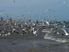 36-praiasouthpadreisland