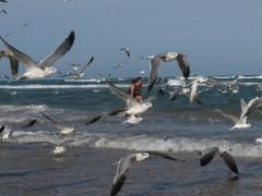 37-praiasouthpadreisland