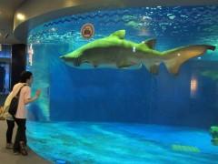 tubarão aquário de shinagawa tóquio