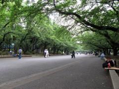 ueno park cerejeiras verao