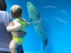 eric e a foca pintada tóquio