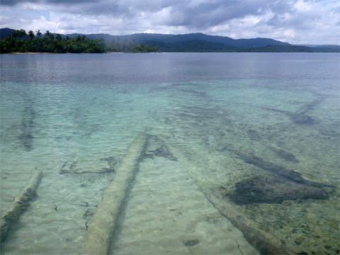 Muitos coqueiros caídos dentro d'água