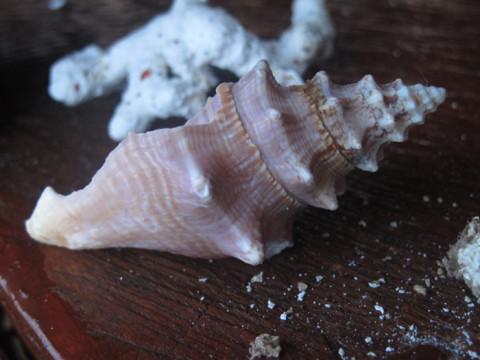 Conchas e corais que estavam no cantinho da varanda