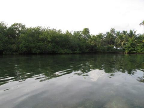 Primeira parada no passeio ao manguezal