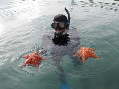 Estelas do mar, lindas, vimos muitas em San Blás