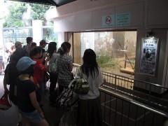 muvuca pra ver os pandas