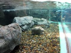 peixes do rio e baía tóquio