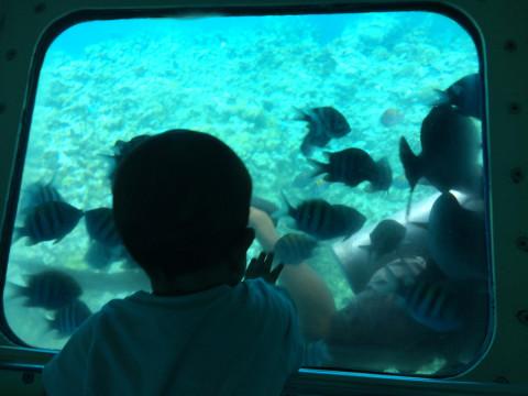 Nicholas vidrado nos peixes