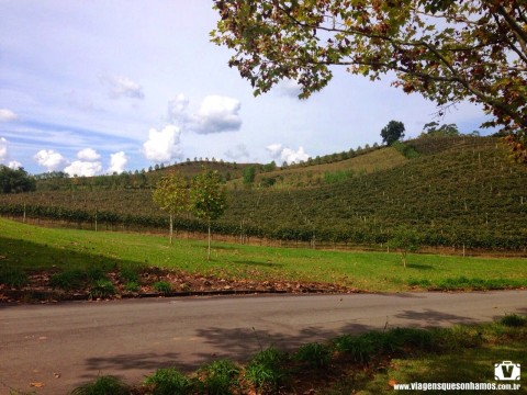 Wine Garden no Vale dos Vinhedos. Foto: Francine Agnoletto