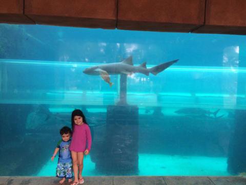 As crianças na frente do tanque de tubarões e o toboágua lá atras, por dentro
