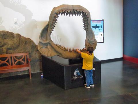 Augusto colocando a mão nos dentinhos de um animal marinho pré-histórico