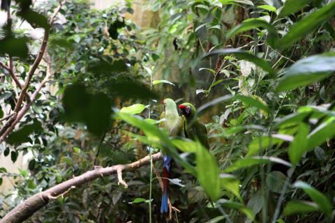 Araras na área de Floresta Tropical