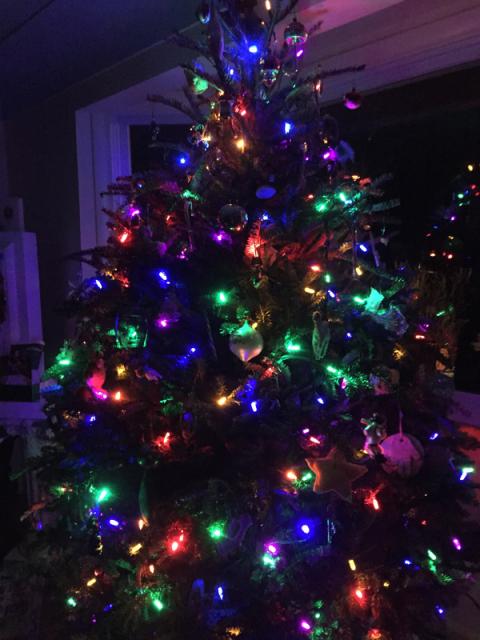 A árvore de Natal (natural) da minha sogra